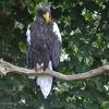 vogelpark-walsrode-b