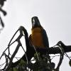 vogelpark-walsrode-e