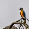 vogelpark-walsrode-f