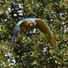 vogelpark-walsrode-g