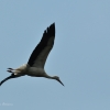 walsrode-storch1