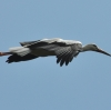 walsrode-storch2