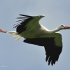 walsrode-storch4