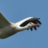 walsrode-storch5
