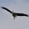 walsrode-storch6