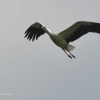 walsrode-storch7