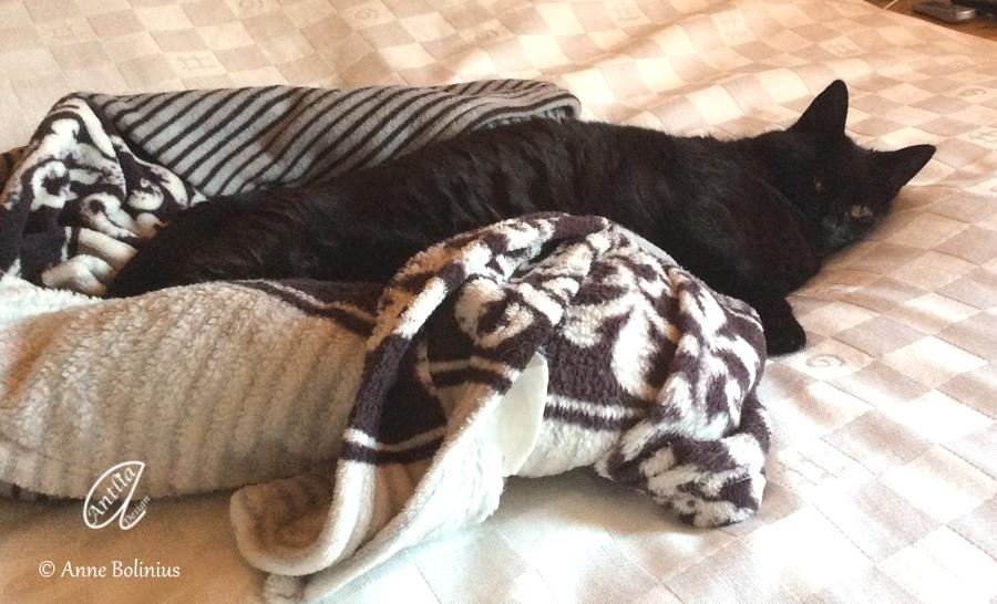 4 s e welsh terrier hundebabys antlia. Black Bedroom Furniture Sets. Home Design Ideas