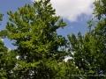 baumwipfelpfad-prora-19-jpg