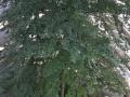 baumwipfelpfad-prora-37-jpg