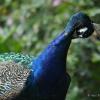 vogelpark-walsrode-c