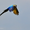 vogelpark-walsrode-h