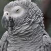 vogelpark-walsrode-j