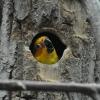 vogelpark-walsrode-l