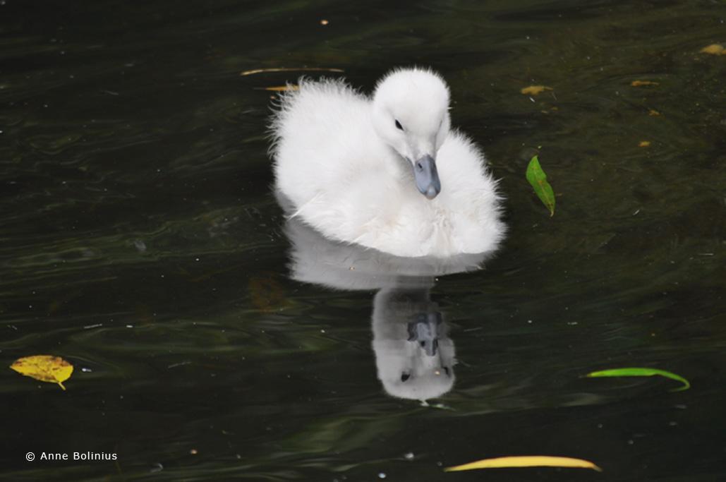 Vogelpark Walsrode – Fotowettbewerb