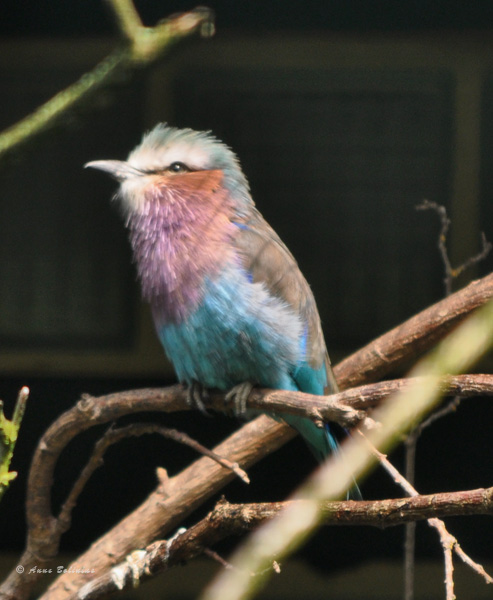Vogelpark Walsrode – Mai 2017