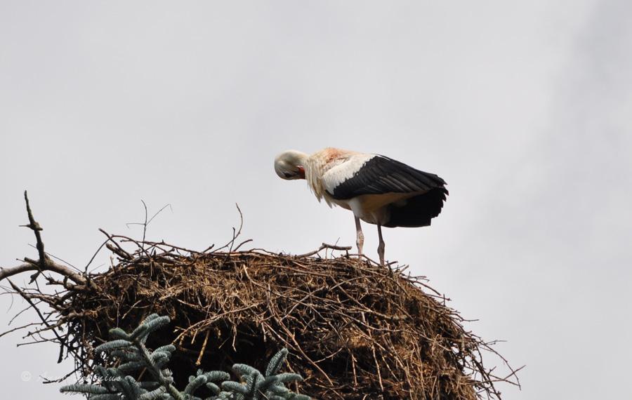 Vogelpark Walsrode III